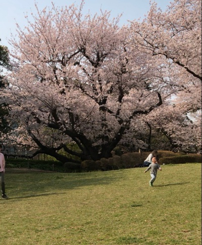 公園 お花見 親子